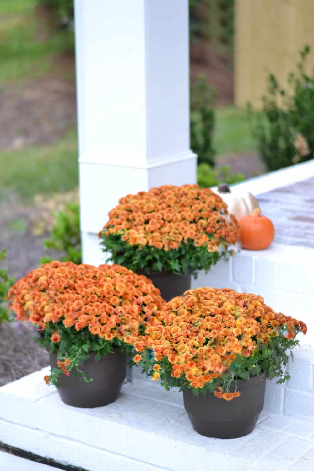 fall flowers on a front porch