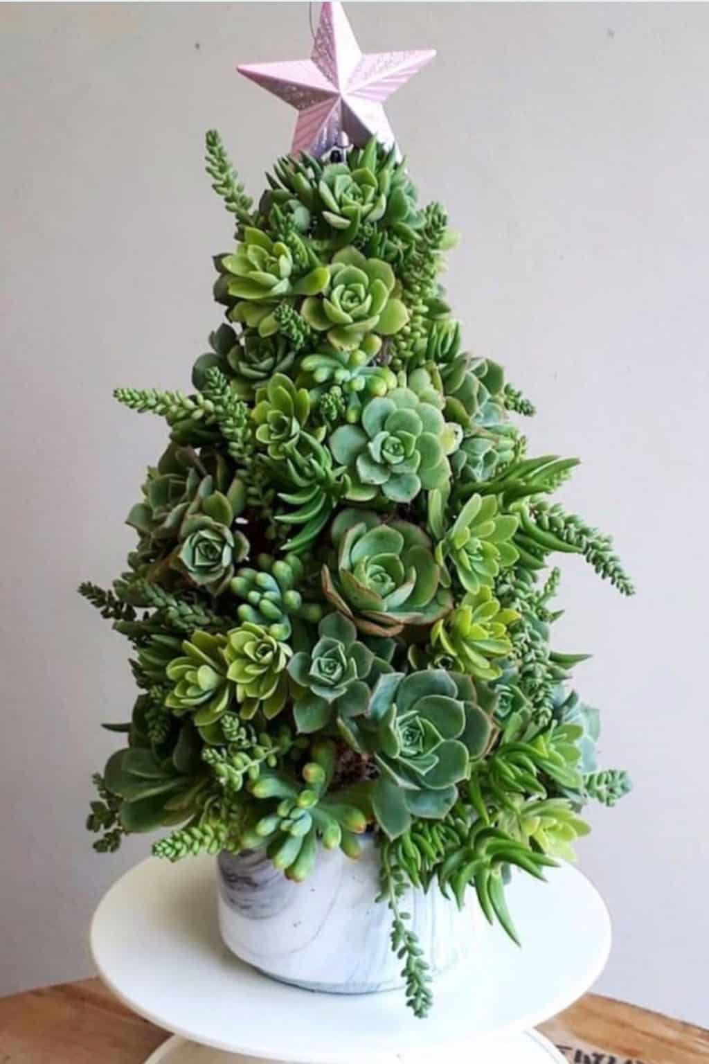 christmas tree made out of succulents