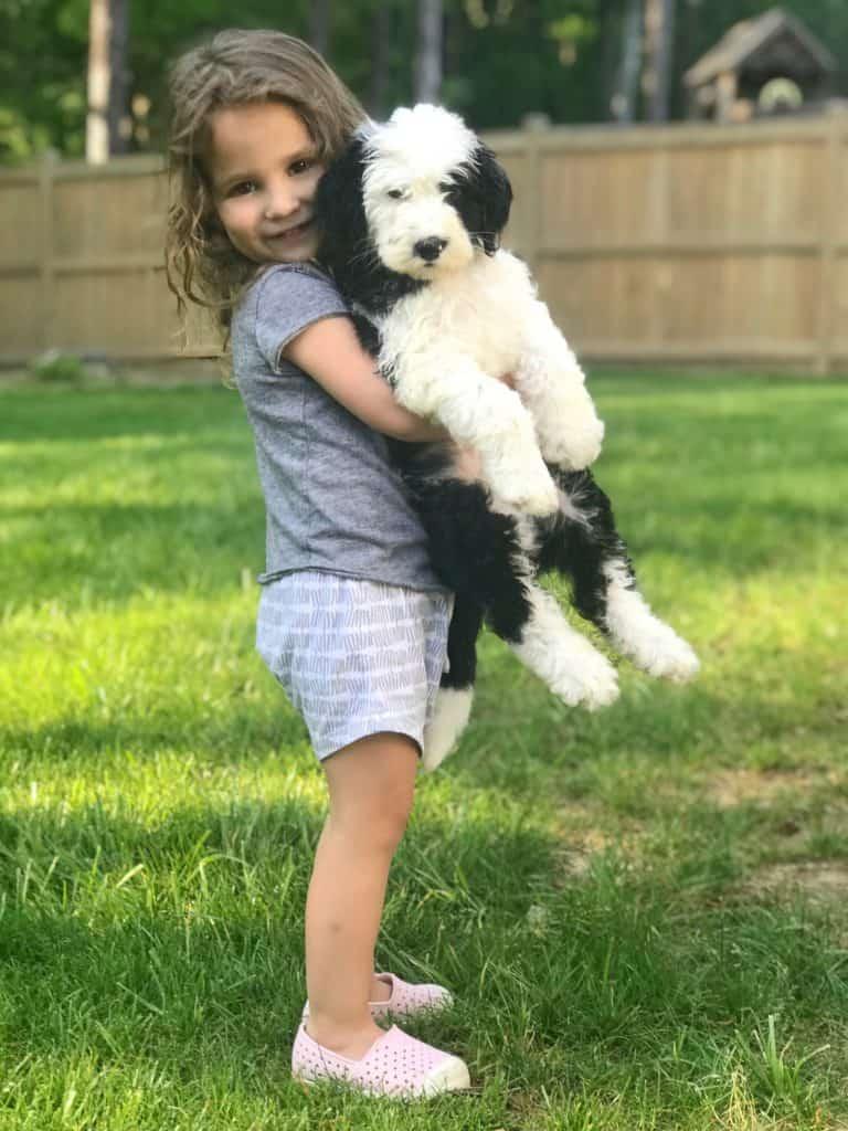 little girl outside holding a sheepadoodle